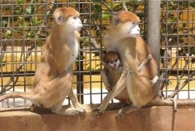 monkey-park-tenerife-attraction-7-960x650_c