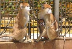 monkey-park-tenerife-attraction-7-960x650_c